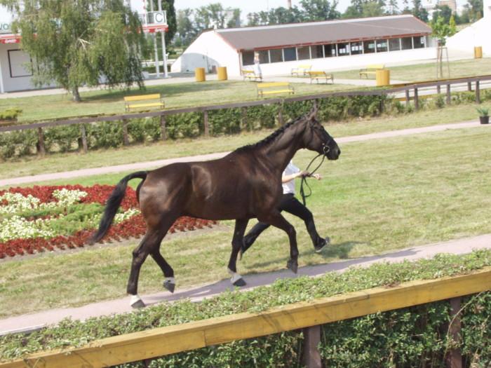 EM Pardubice 2003